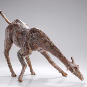 Giraffe - Arno Goossens