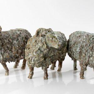 Drentse schapen - Arno Goossens