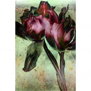 Fading Flowers - Rob de Heer